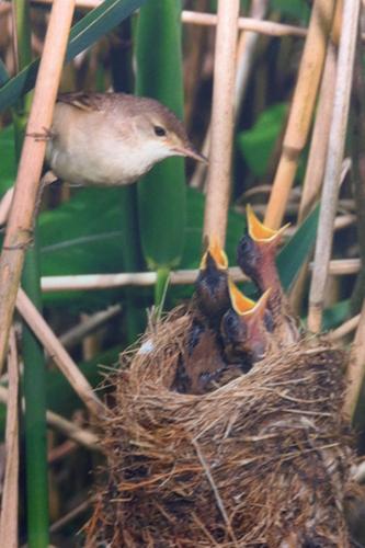 easthamhall-bird.png