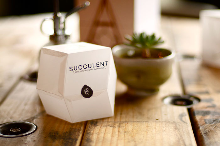 02_28_13_succulent_5.jpg