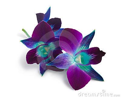 BLUE Orchids.jpg