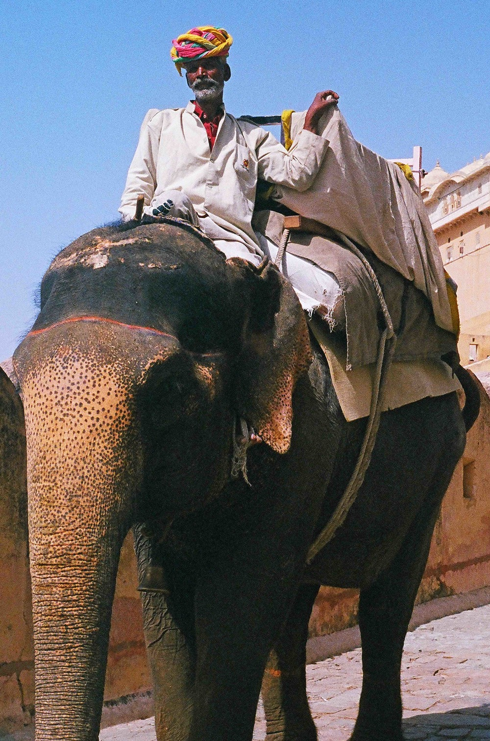 elephant11.5x17.375.jpg