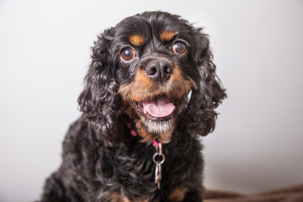 Jasmine4-23-2015-Pet-Portraits-Shana-Schnur-Photography-001.jpg