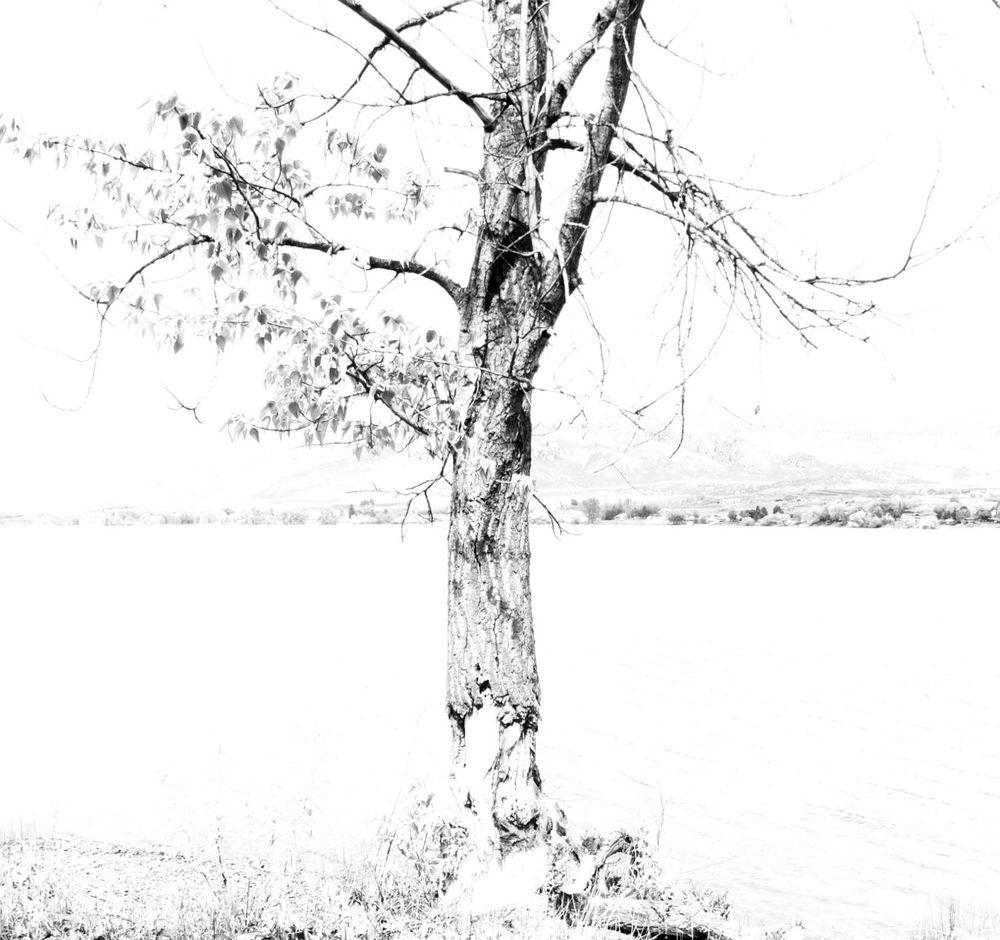 bl:wh texture tree.jpg