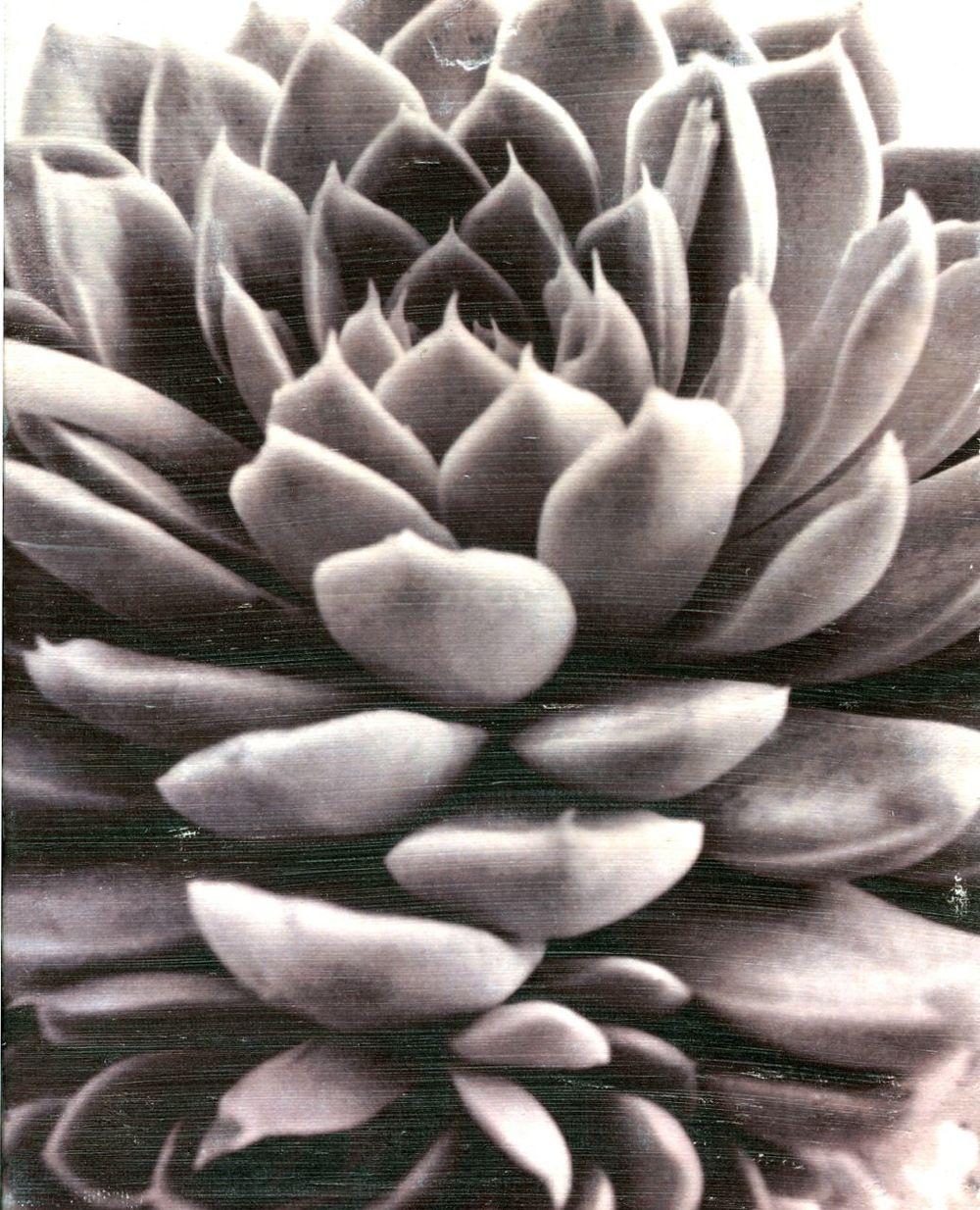 lotus echeveria succulent cactus zen yoga studio image