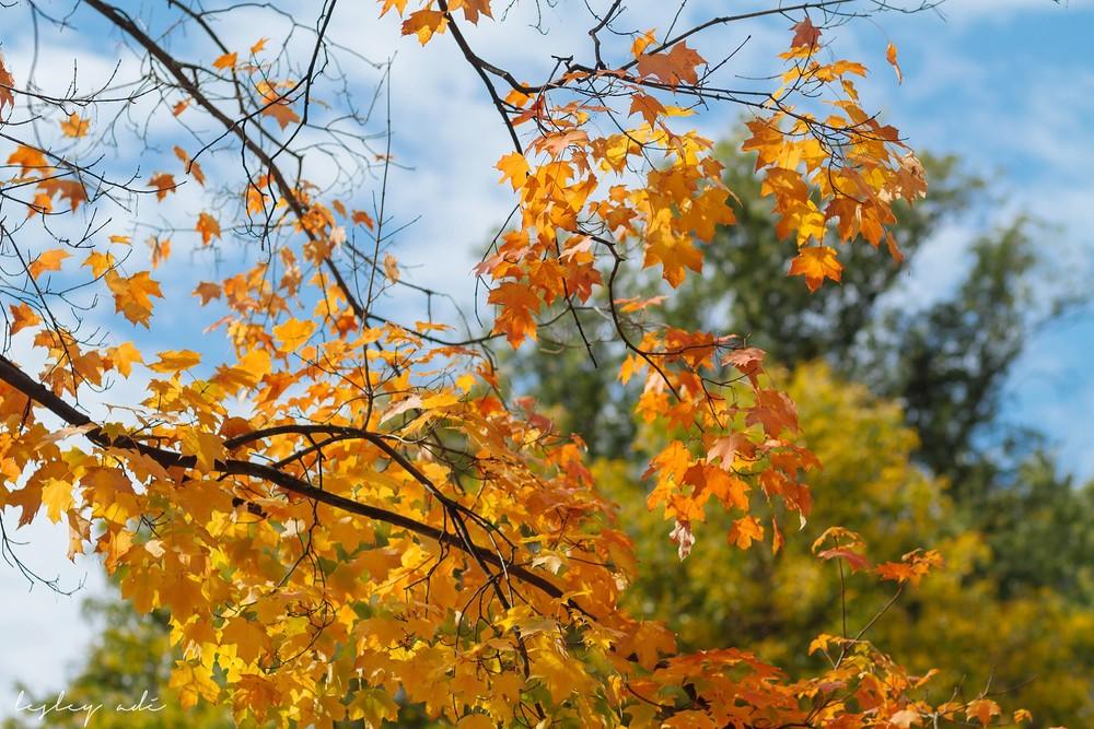 fall-family-portraits-washington-park-10.jpg