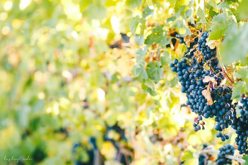 finger-lakes-fall-wedding-vineyard-177.jpg