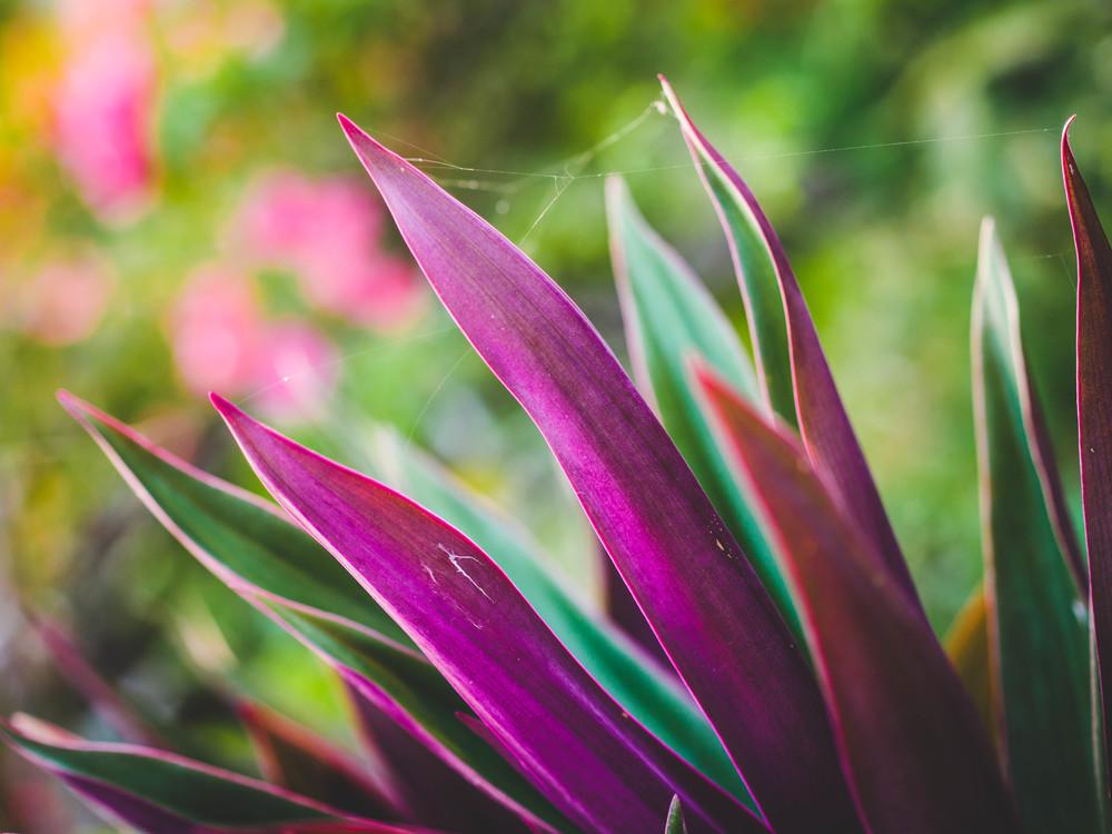 Leafy-2.jpg