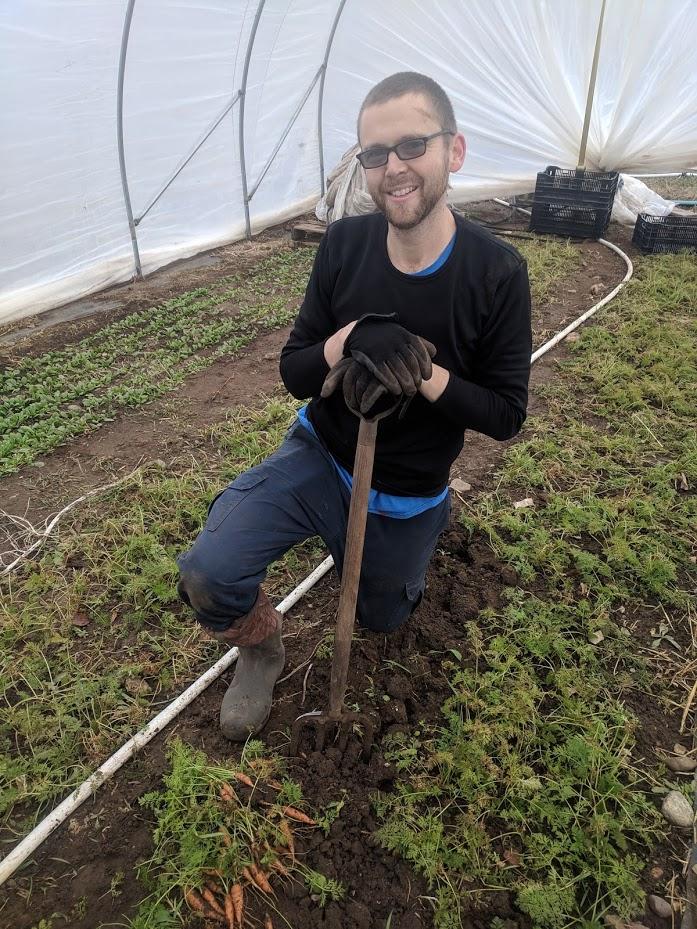 harvest carrots.jpg