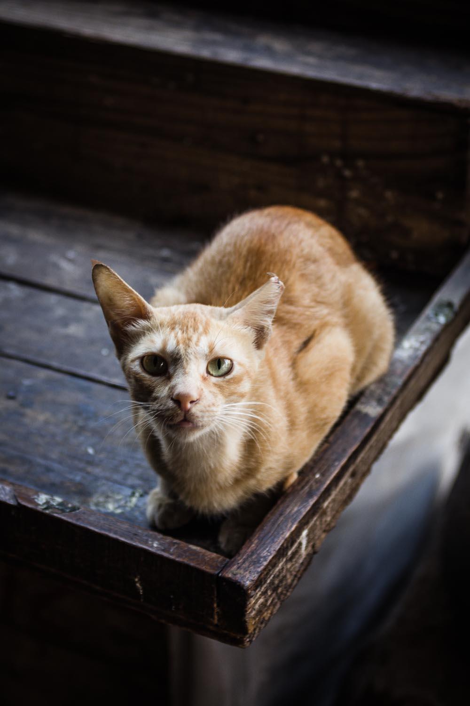 Colaba street cat