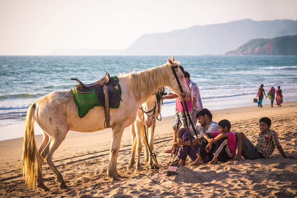 Horse & family