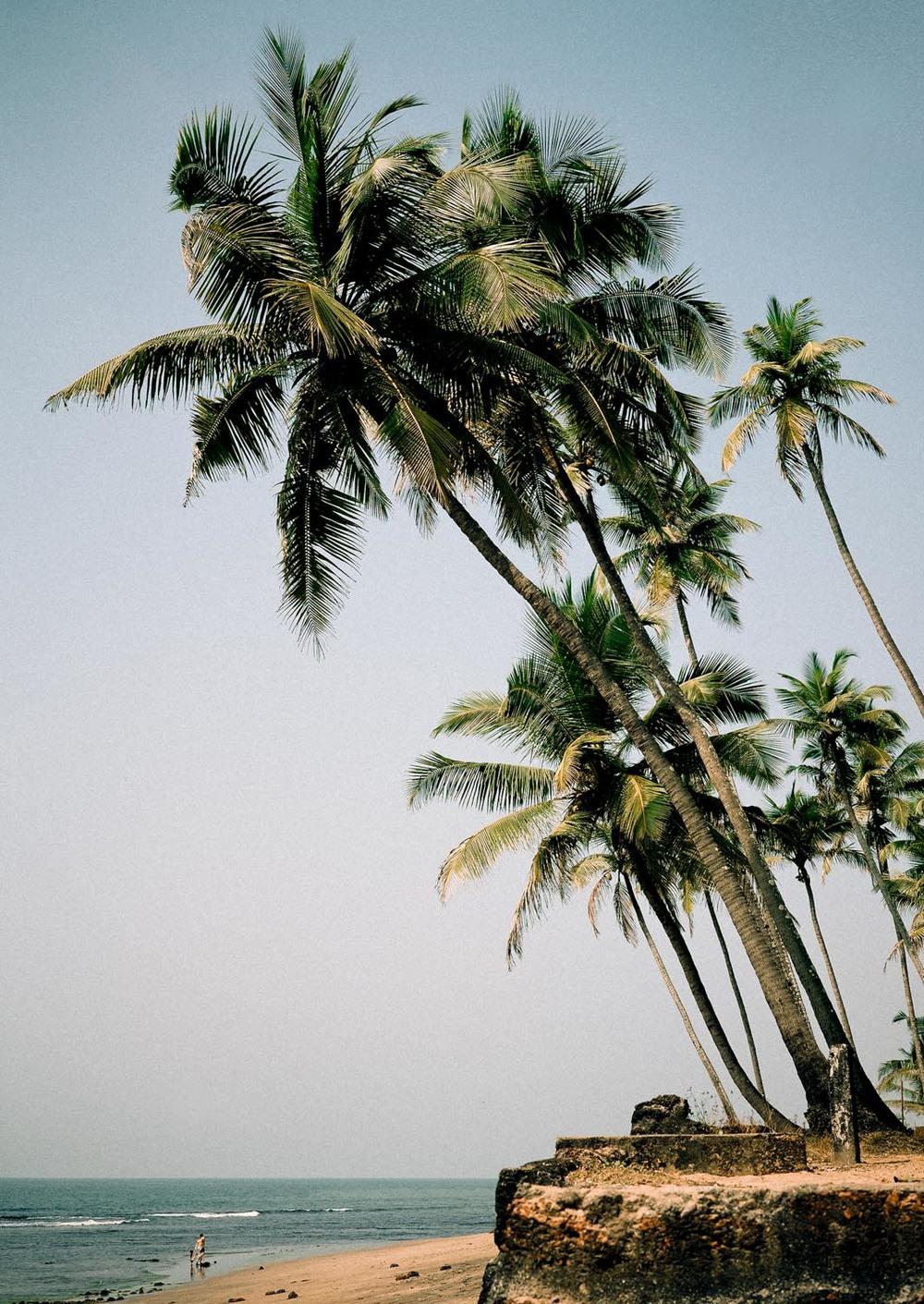 Anjuna palms