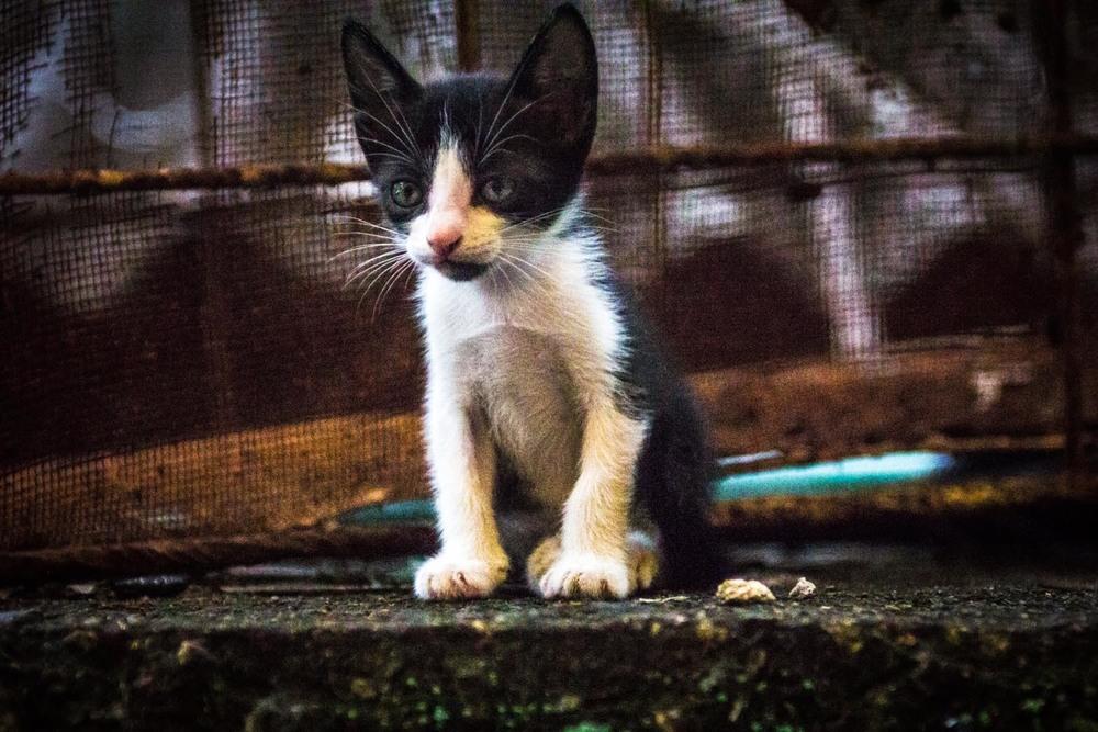 Rooftop Kitten