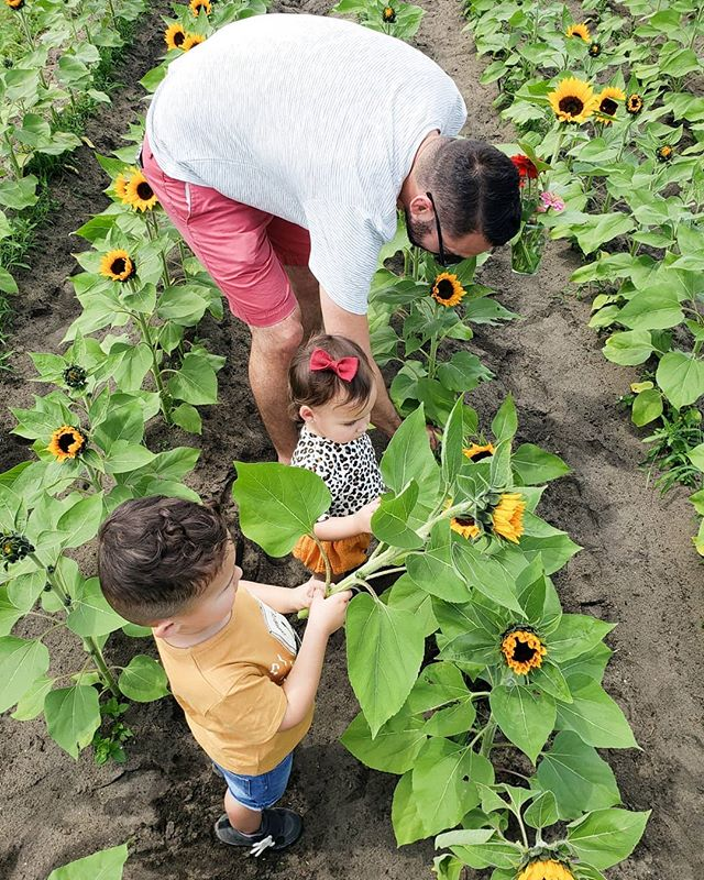 Busy Sunday Funday! First: swimming class @goldfishswimschool then lunch @yellowdogeats and last but not least sunflower and blueberry picking @southernhillfarms !!!! 👨‍👩‍👧‍👦💕😍. How did your funday go? #sundayfunday  #andyandcecioh #andresycecilia #yeartwoyearone