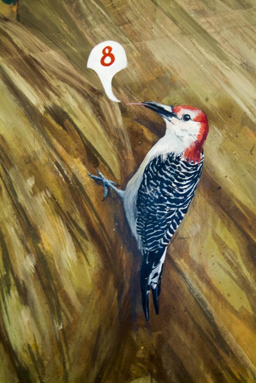 red-bellied woodpecker 2.jpg