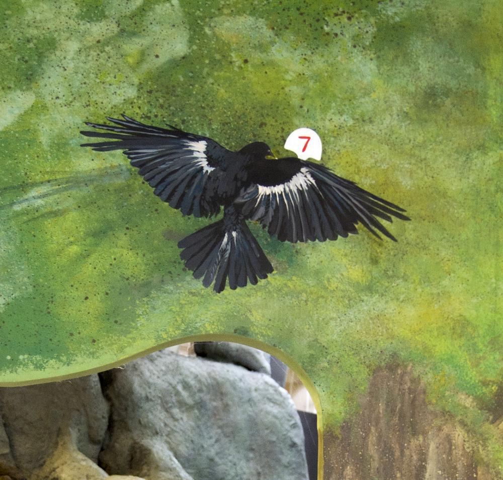 FIsh Crow 2.jpg