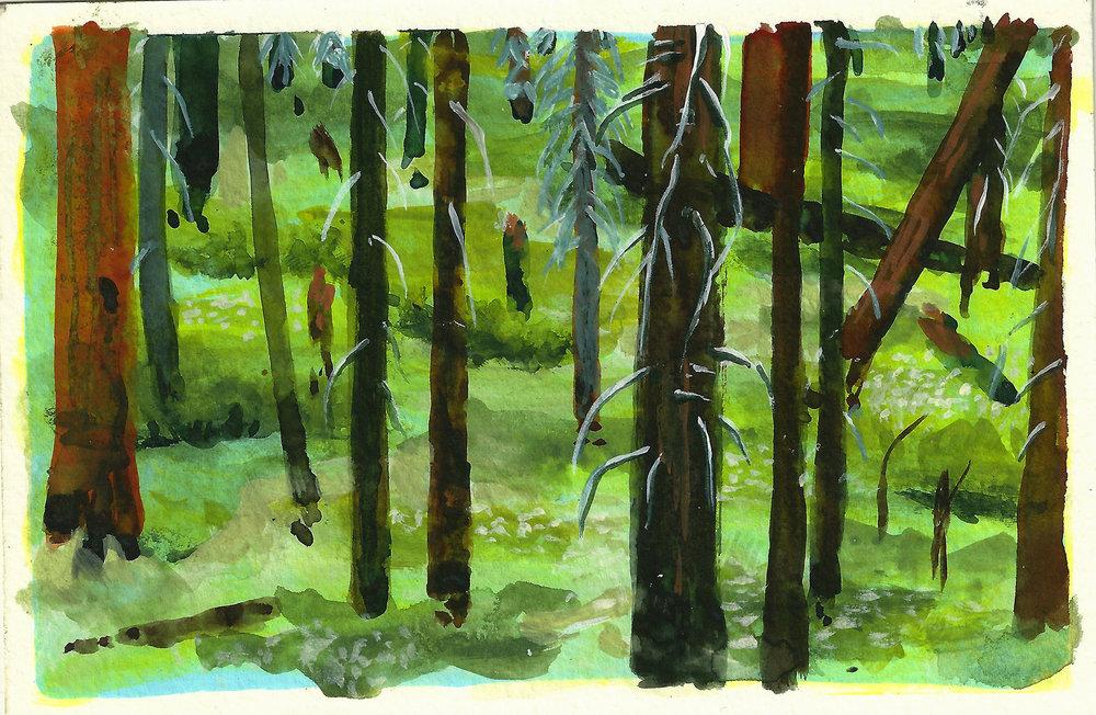 redwood forest.jpg