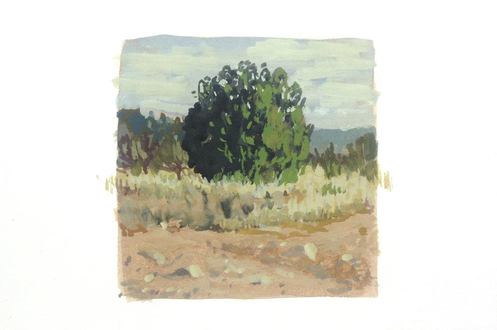 sedona bush.jpg