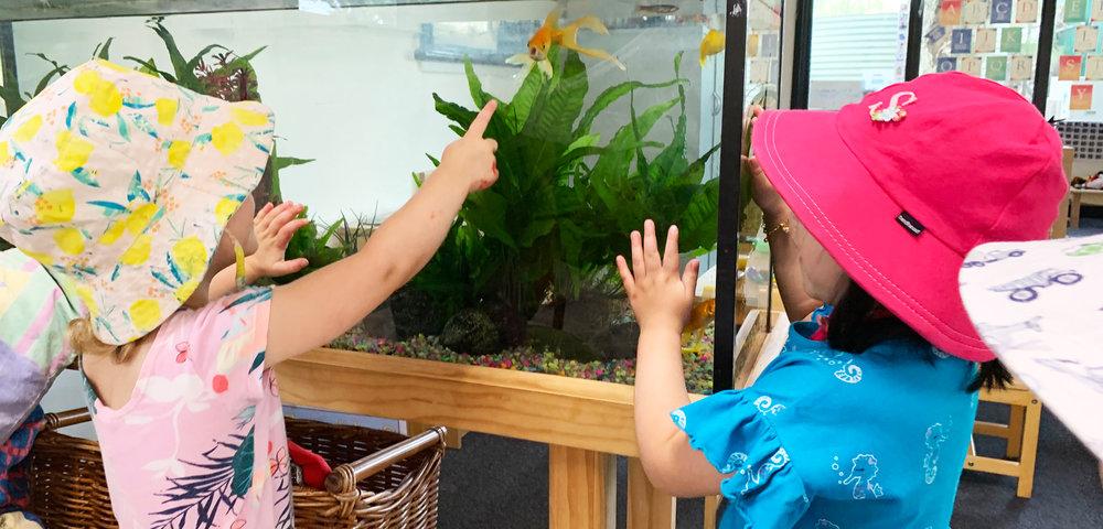 fish tank pointing.jpg