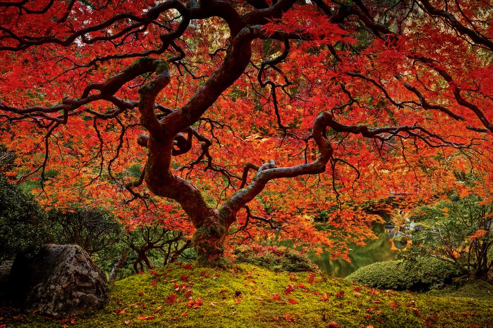 Autumn's EmbersWEB.png