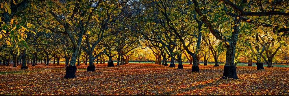 THE GROVE - Wheatland, California