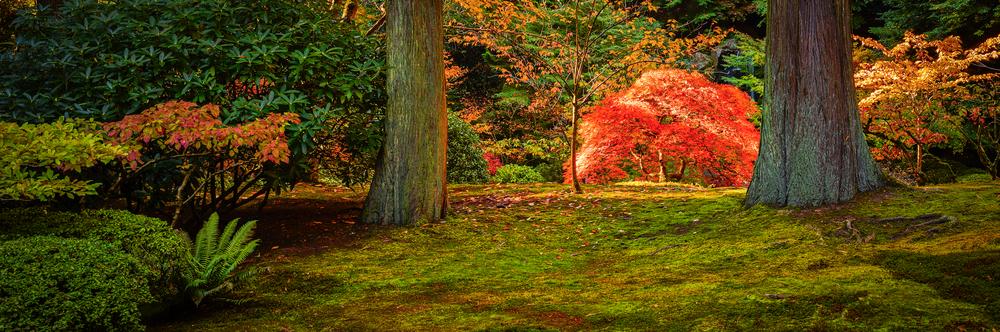 GARDEN LIGHT- Portland, Oregon
