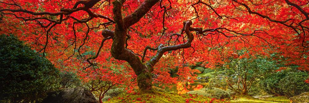 AUTUMN MEMOIRS - Portland, Oregon