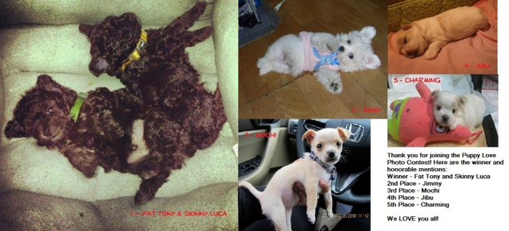 PuppyLoveWinners2.jpg