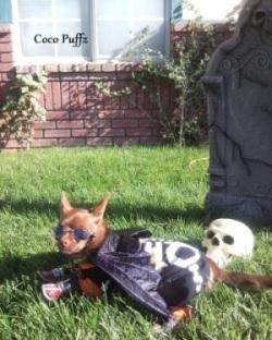 Halloween Contest_Coco Puffz.jpg