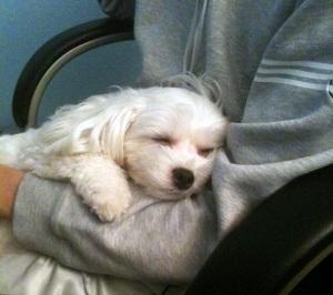 PetParentDay.jpg