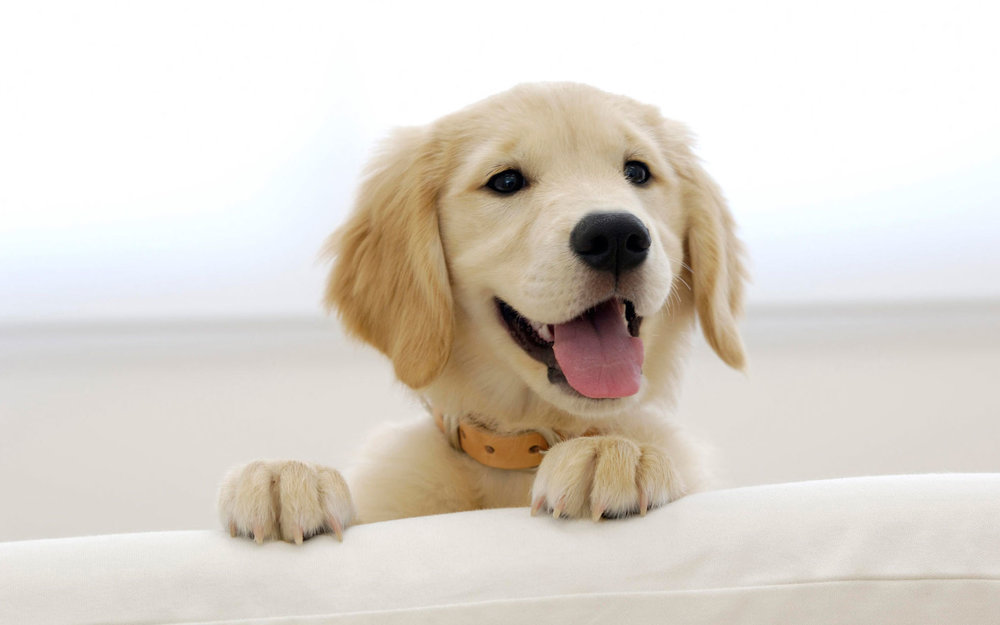 Cute-dog-wallpaper-HD-free-download.jpg