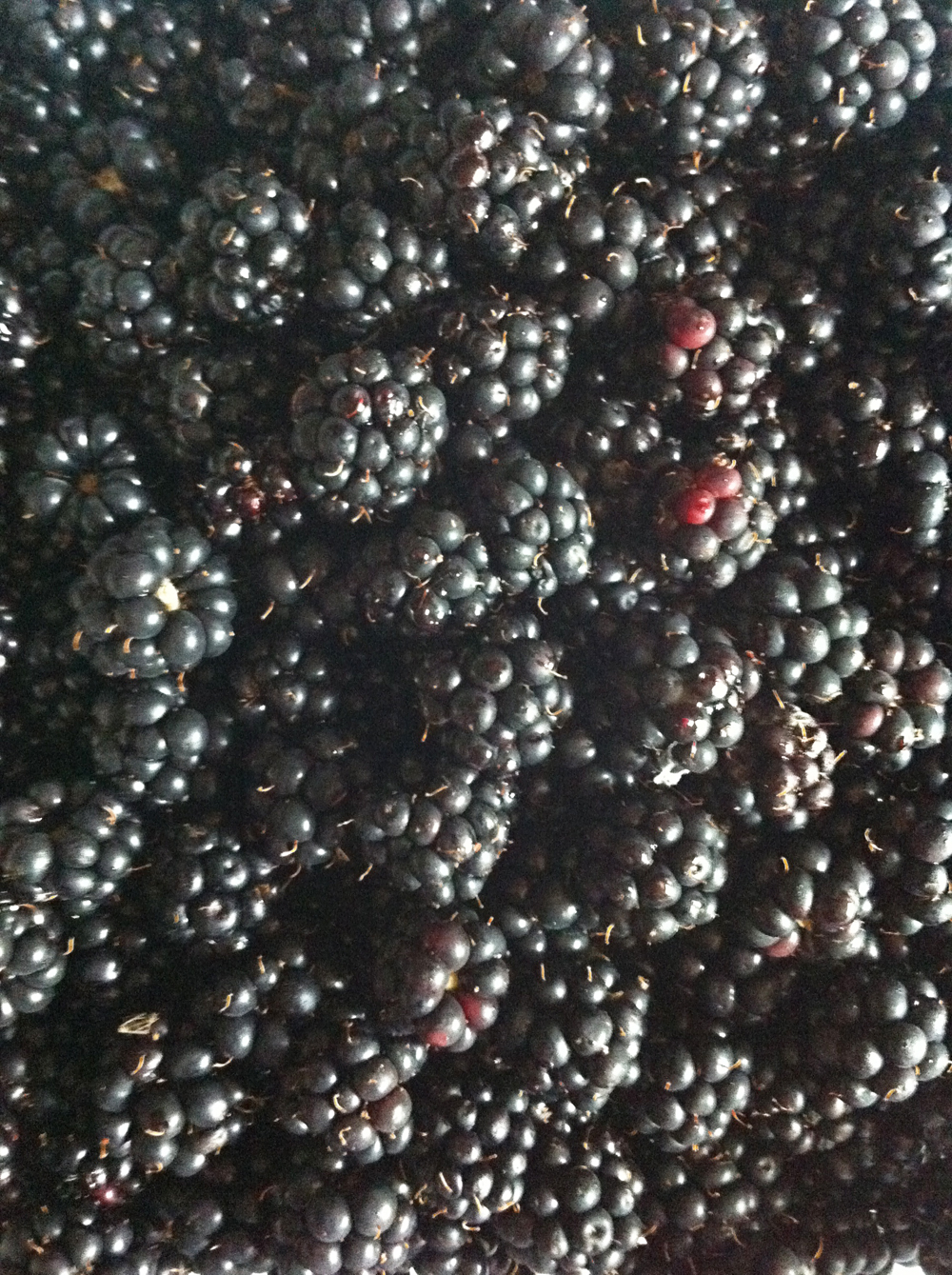 wildblackberries