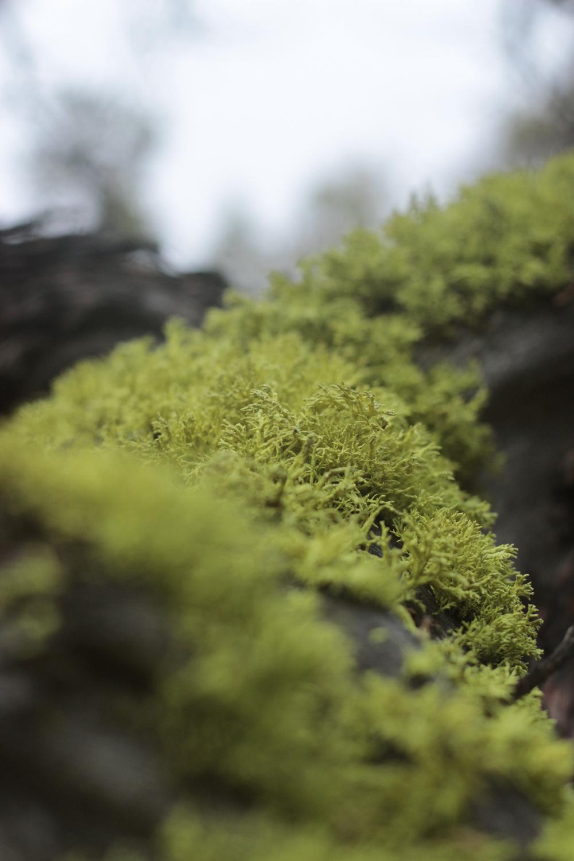 green-lichen