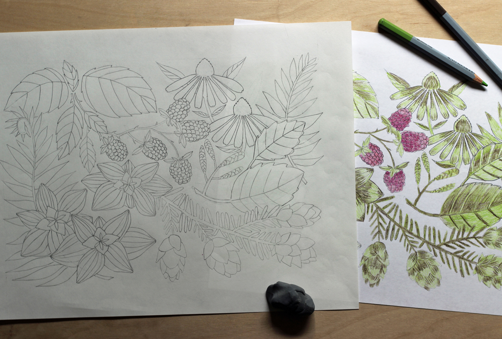 botanical-drawing