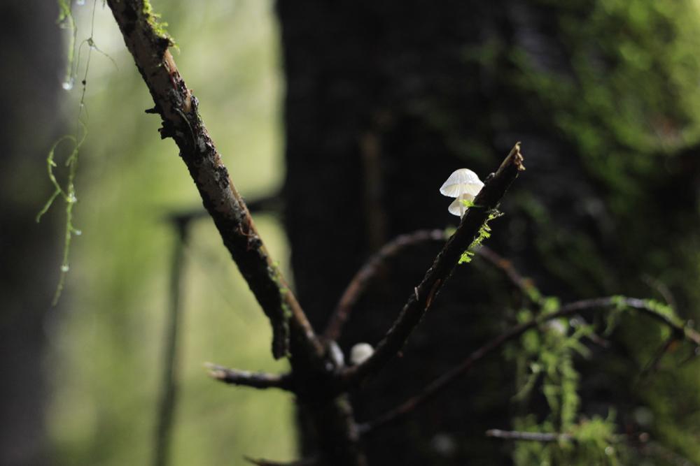 tree host
