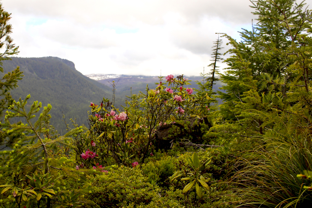 rhododendron-view