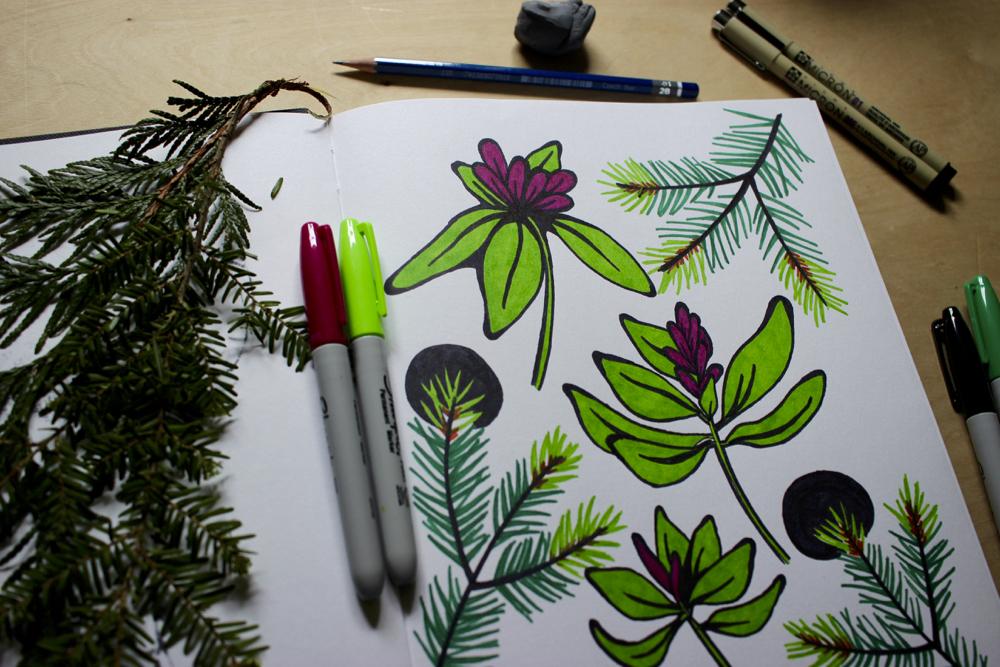 rhododendron-sketchbook