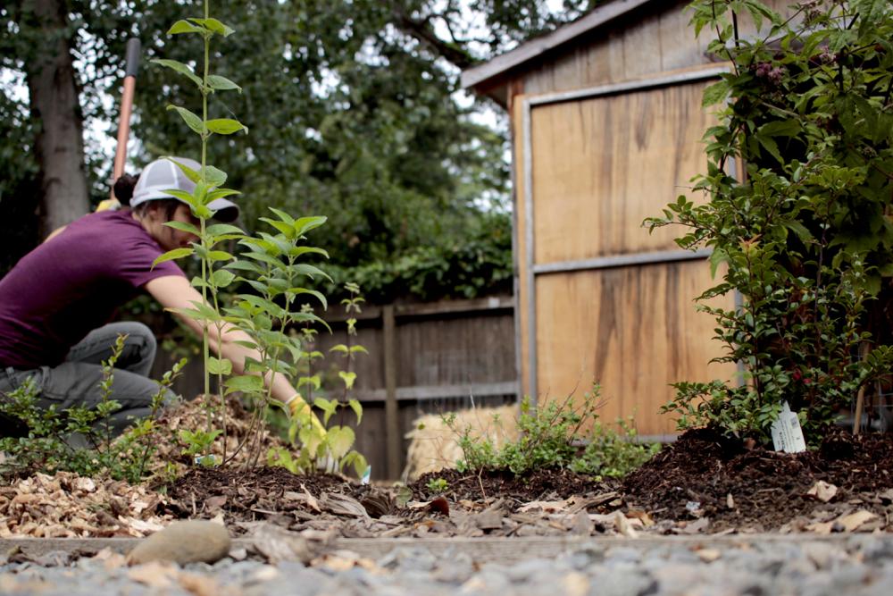 Mulching the garden