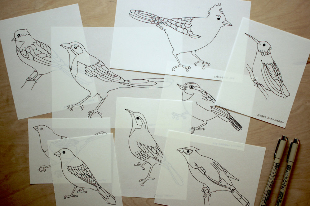 bird illustrations on vellum