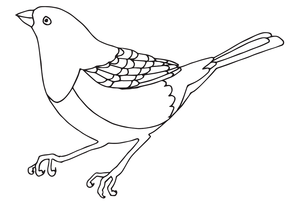 Spotted Towhee bird illustration for a bird coloring book
