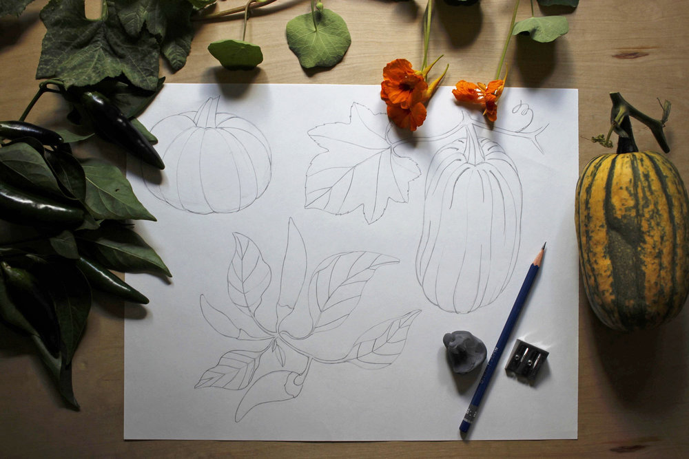 "Drawing in progress for ""Autumn Harvest"" gift wrap, bringing the garden in to draw"