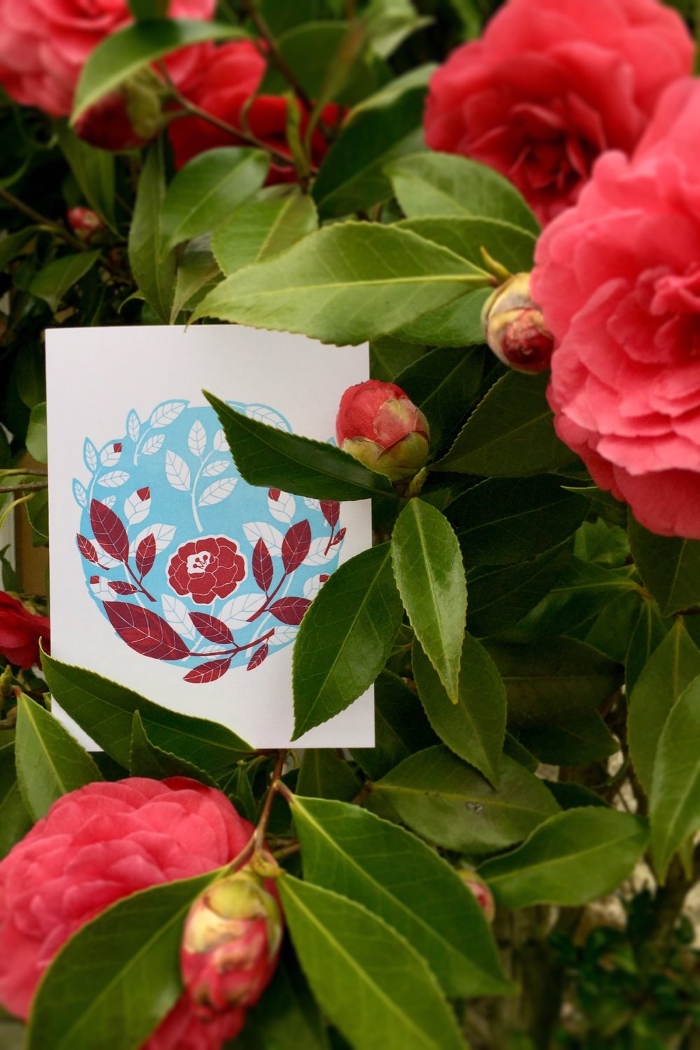 Tiger Food Press camellia card in the resident camellia shrub