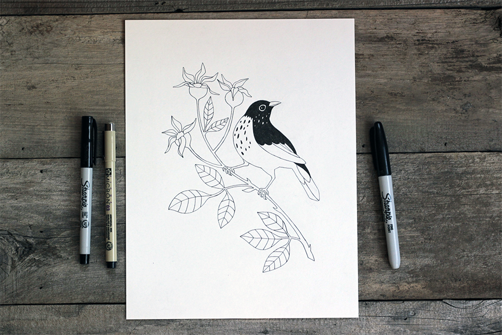 Hermit Thrush drawing in Sharpie and Micron from sketchbook