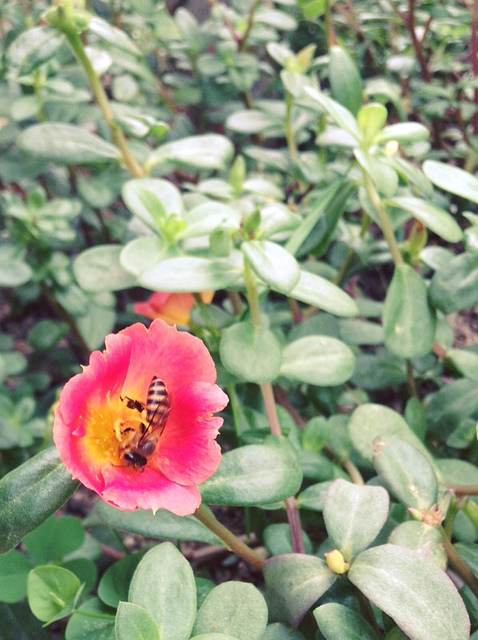 Bee and Flower.jpg