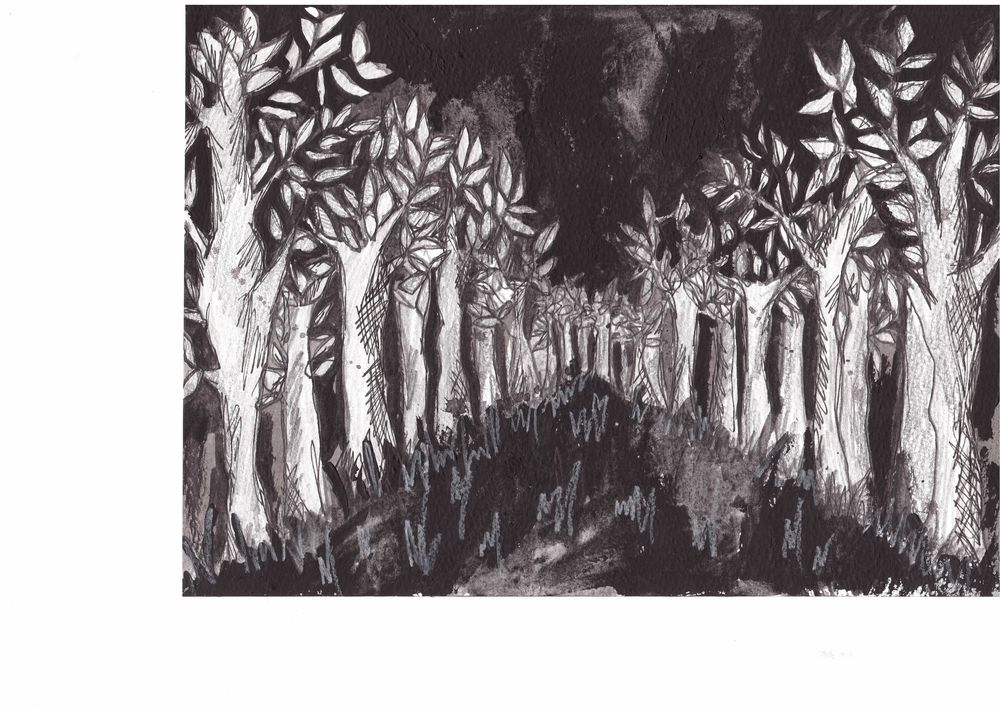 BB forest.jpg