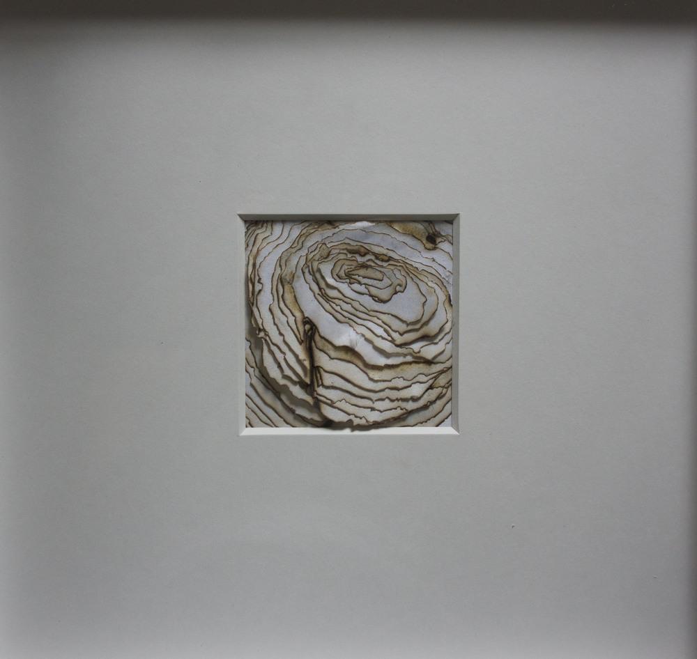 'Cipolla', burnt rice paper, 30 x 30 cm