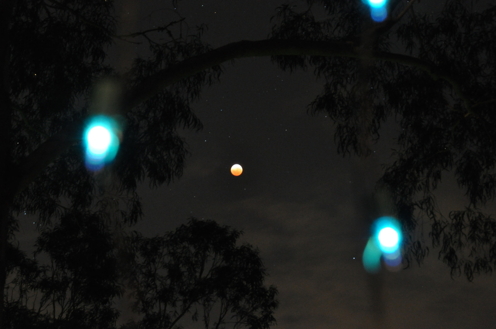 Lunar eclipse meets Christmas lights...