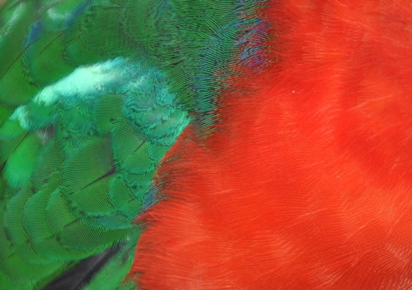 nowthatscolor_web.jpg