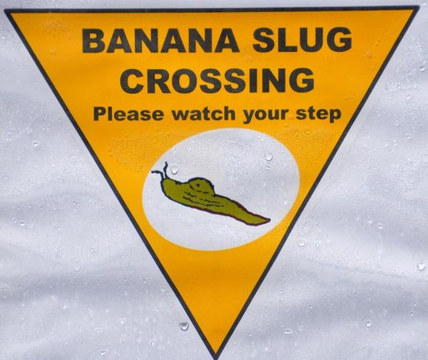 bananaslugcrossing_web.jpg