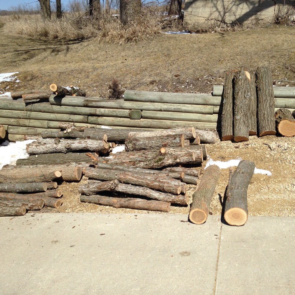 Logs await inoculation