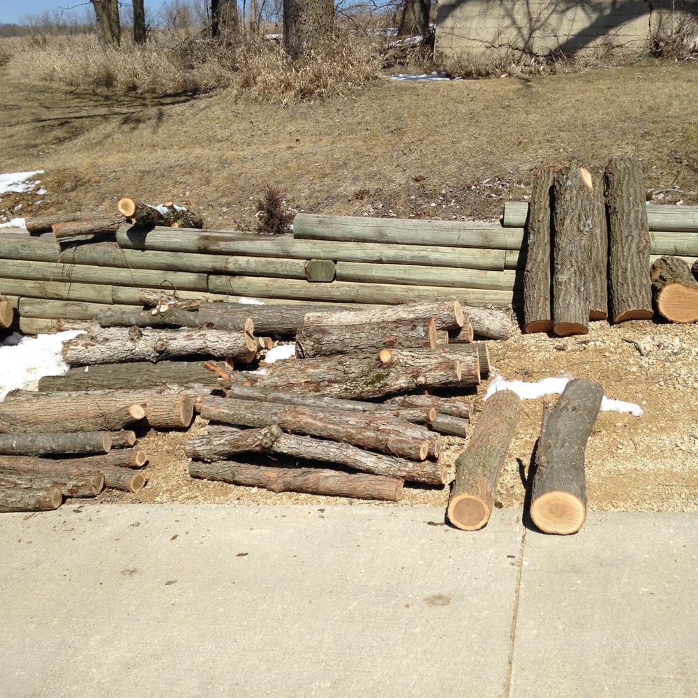 Logs await inoculation