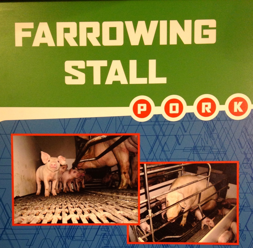 The sow in the bottom right picture is not a model of porcine contentment.